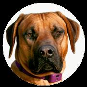 largedog