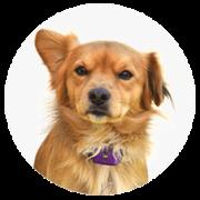 mediumdog